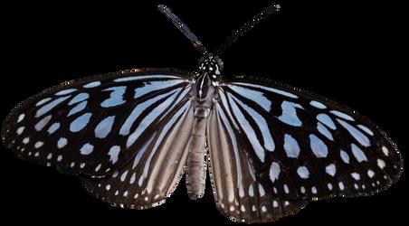 Butterfly4 Clear Cut