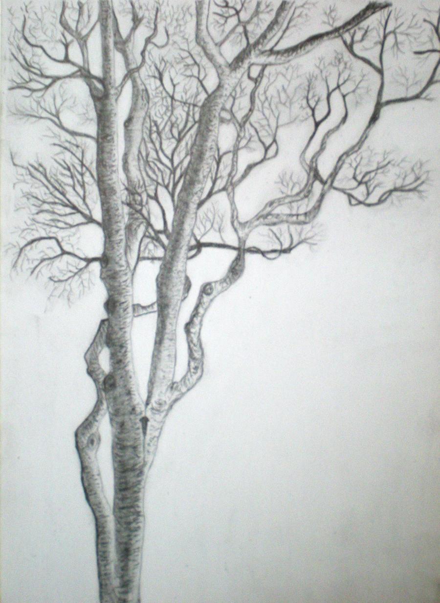 tree sketch 1 by limegreenguitar on deviantart