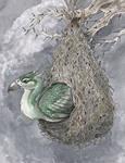 Augurey Nest