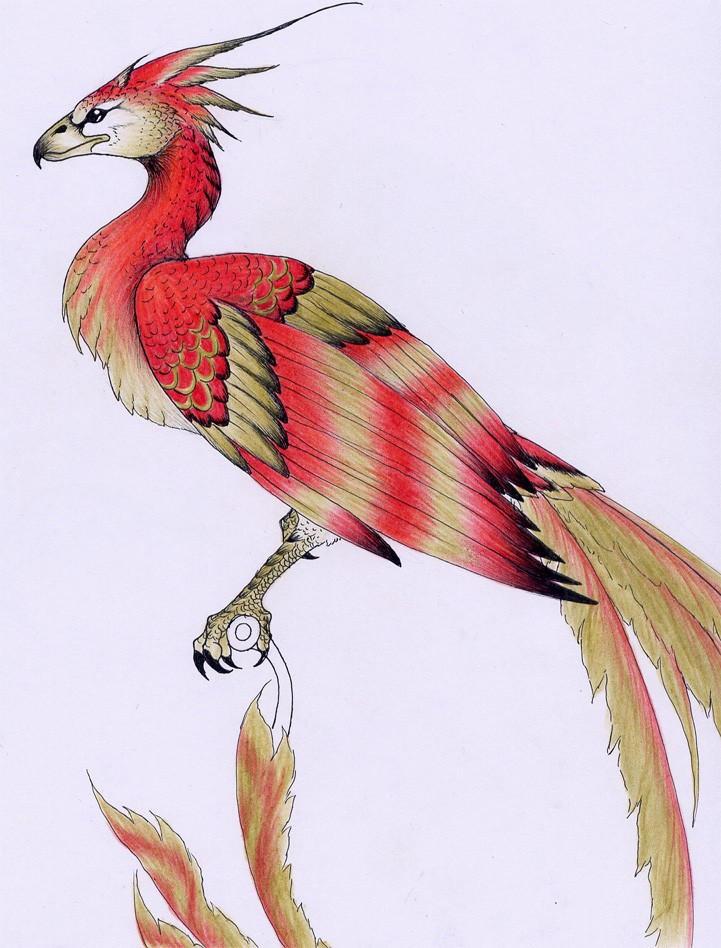 Fawkes the phoenix by verreaux on deviantart voltagebd Gallery