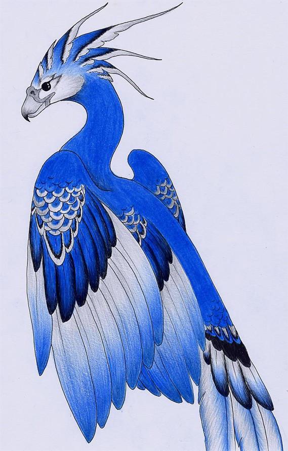 Usuario anterior Fenix_Azul_Mexicano_by_verreaux