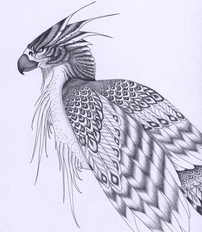 http://fc01.deviantart.net/fs13/f/2007/023/5/4/Ziz_by_verreaux.jpg