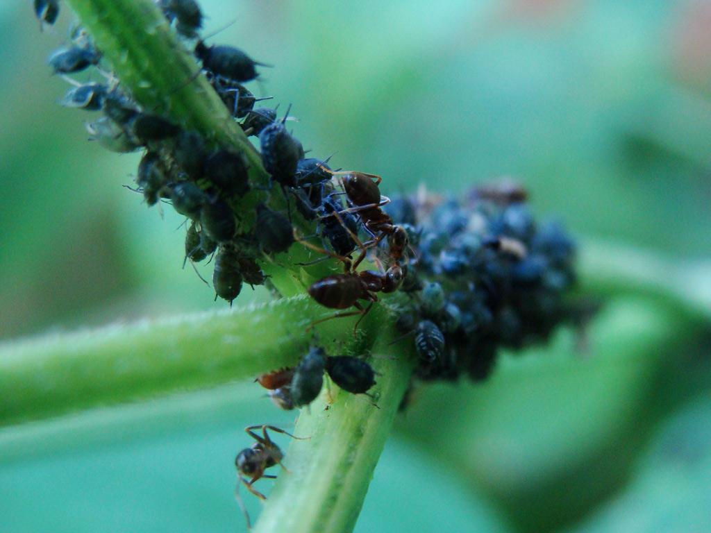 ants by deirathe