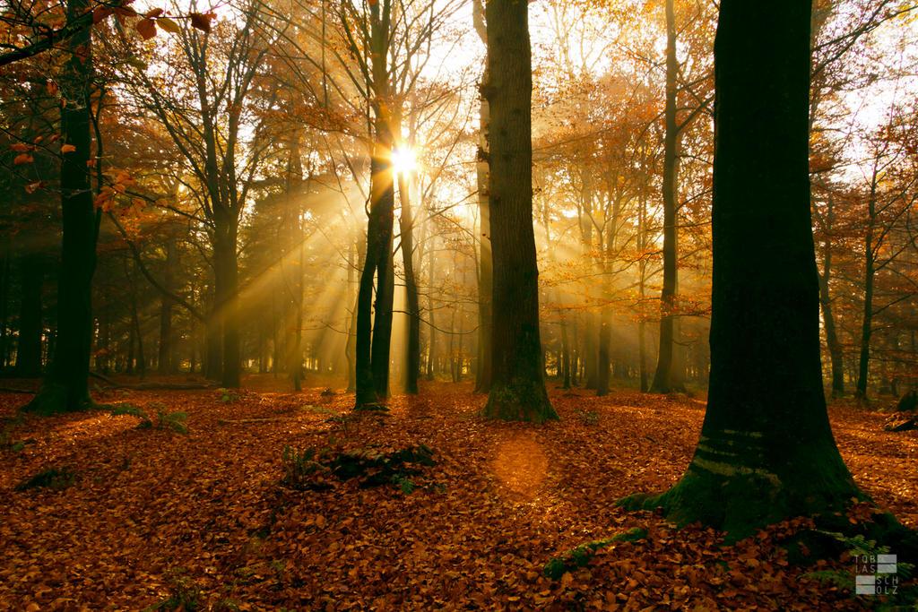 Autumn by Kn3xX