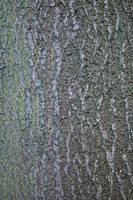 Bark texture_010 by BlokkStox