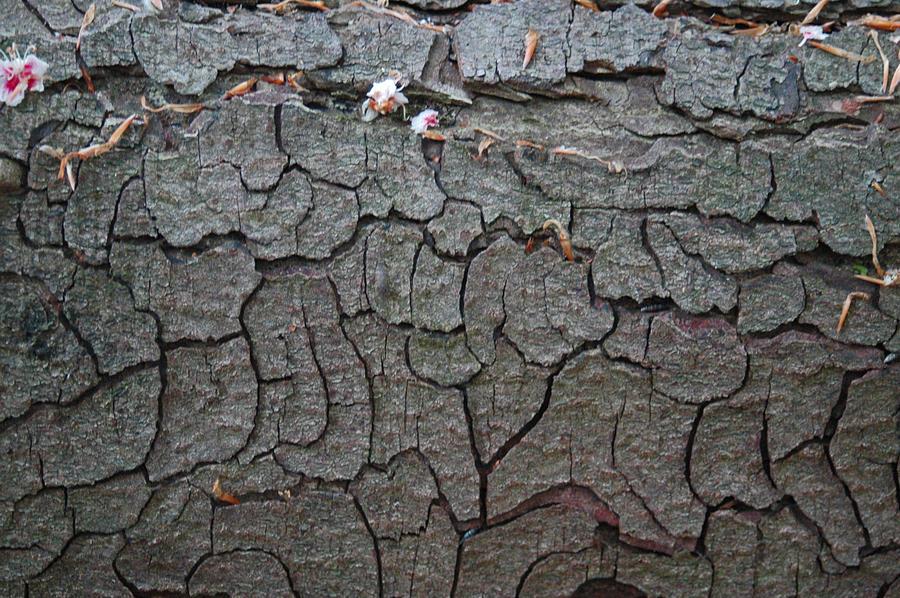 Bark texture_014 by BlokkStox