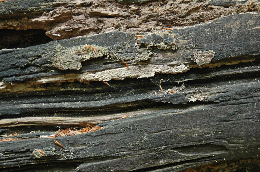 Rotting wood texture_001 by BlokkStox