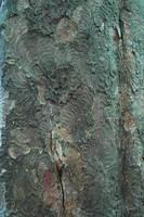 Weird bark texture_001 by BlokkStox