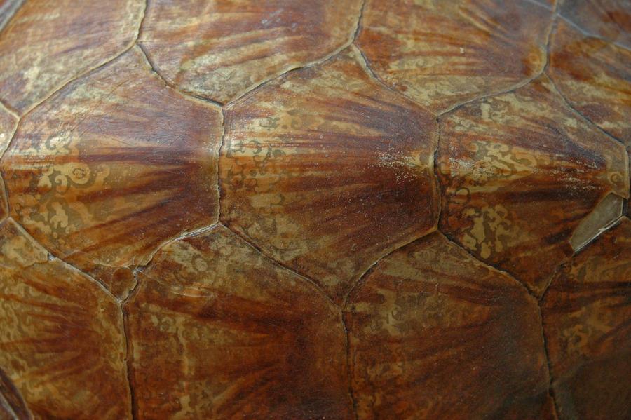 Turtleshell texture_002