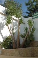 Big Yucca Palm by BlokkStox