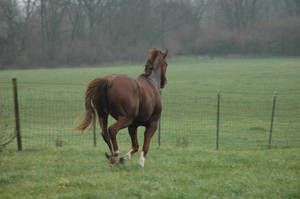 Gallop 2 by stockhorse