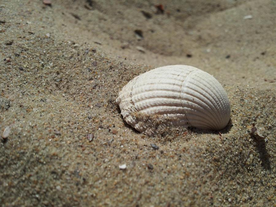 ~ Shell in the Sand ~ by JoJoAsakura