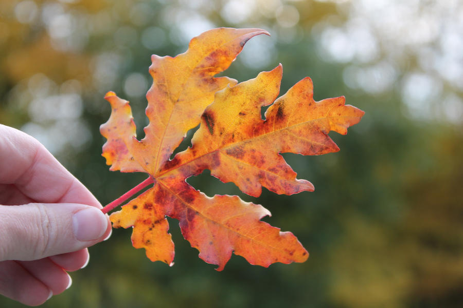 Leaves falling down by JoJoAsakura