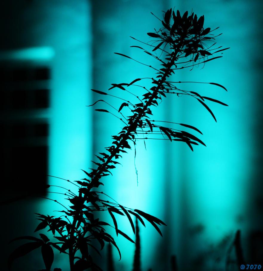 ~ Dancing In The Moonlight ~ by JoJoAsakura
