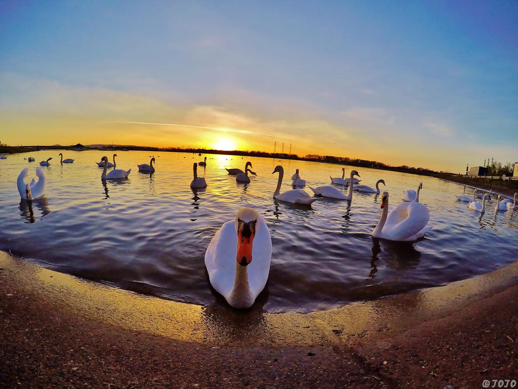 16:52 - Swan Lake by JoJoAsakura