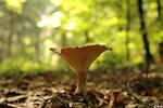 37:52 - Mushroom
