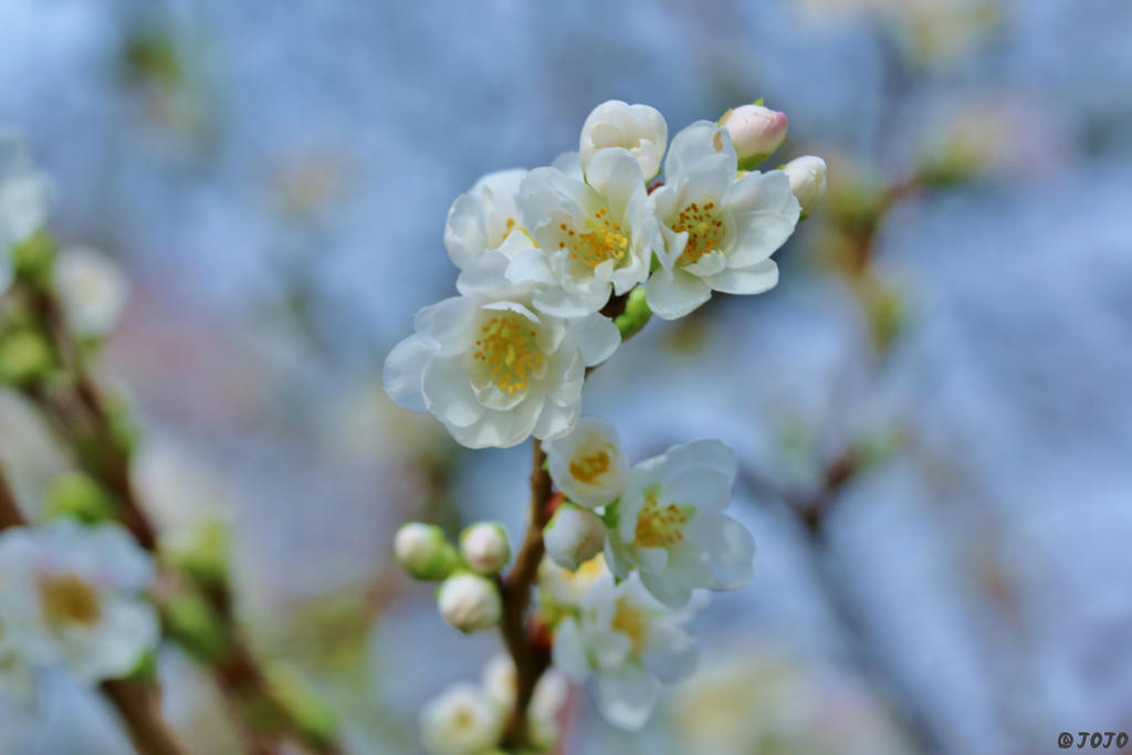 47:52 - November Blossoms by JoJoAsakura
