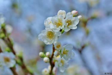 47:52 - November Blossoms