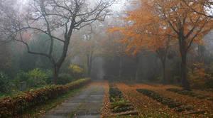 autumnal graveyard