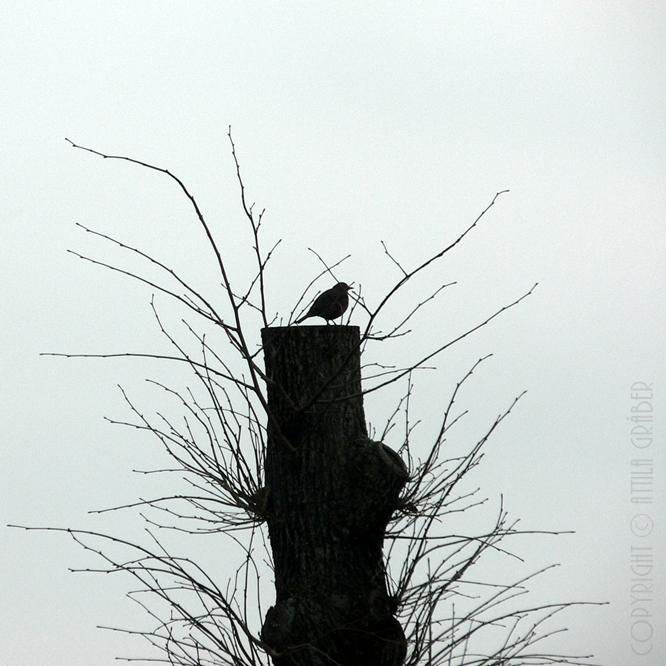 silhouette by Attila-G