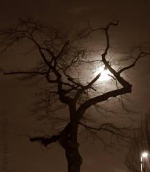 night-shrouded by Attila-G