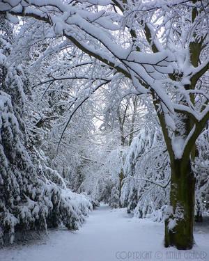 snow-covered path by Attila-G
