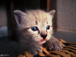 Cute furball by ilNeofita