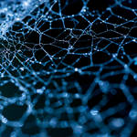 web of life ...
