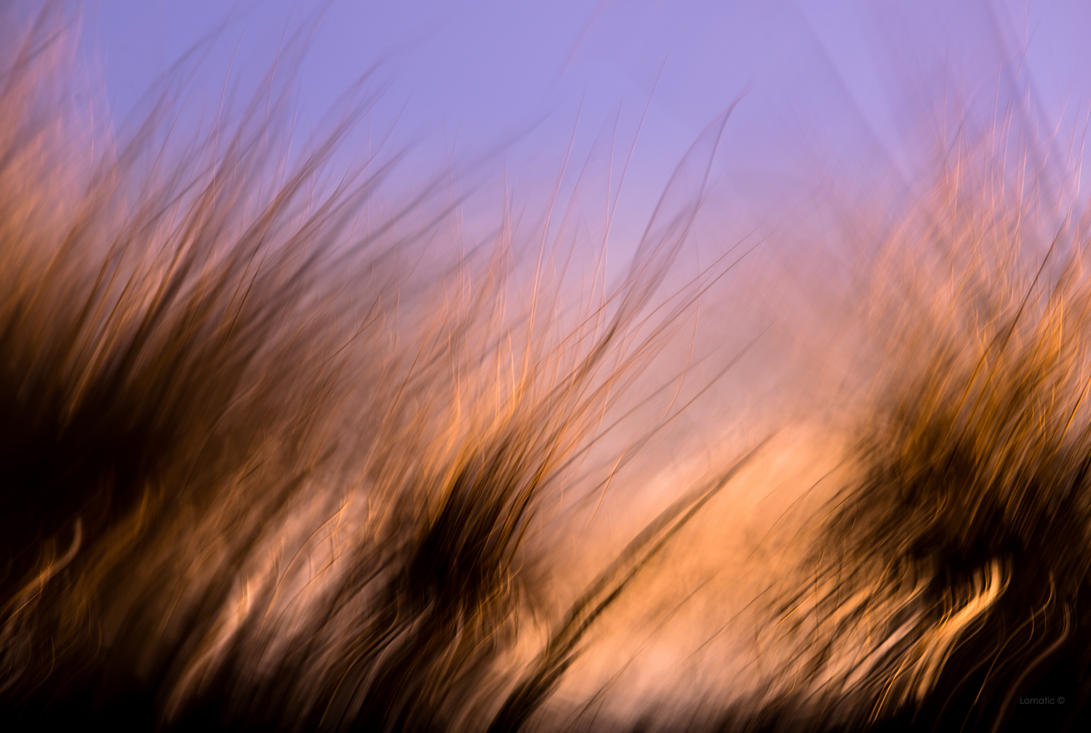Gliding through a field of grass by lomatic