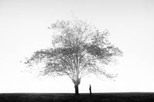 Tree whisperer by lomatic