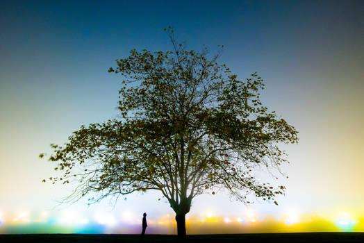 The tree whisperer's colourful dream.