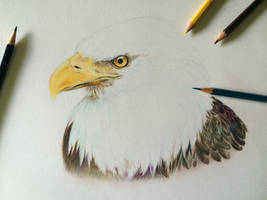Bald Eagle-Wip by o0w0o
