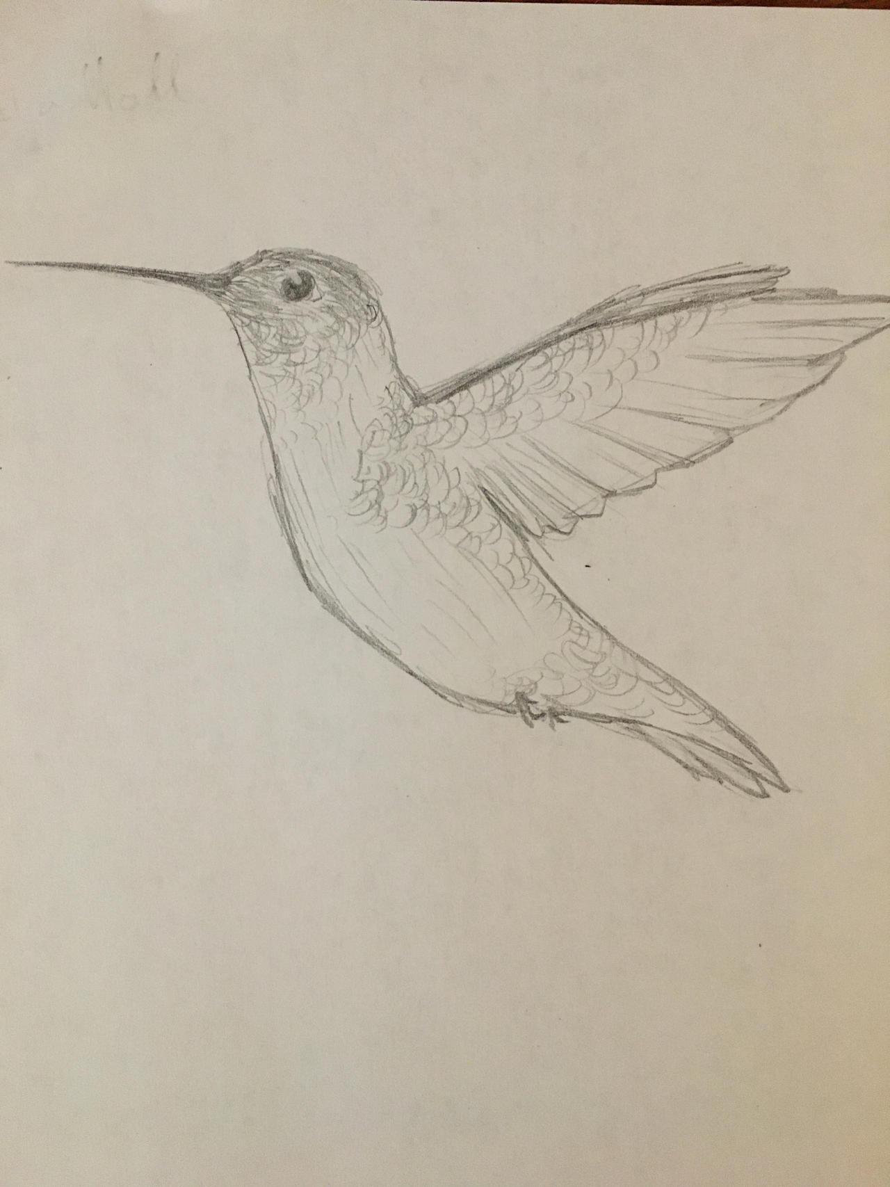 Day one hummingbird