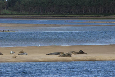 Loch Fleet slugs by piglet365