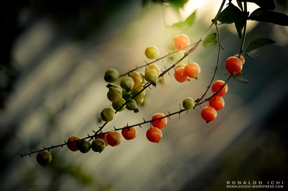 Nature by ronaldoichi