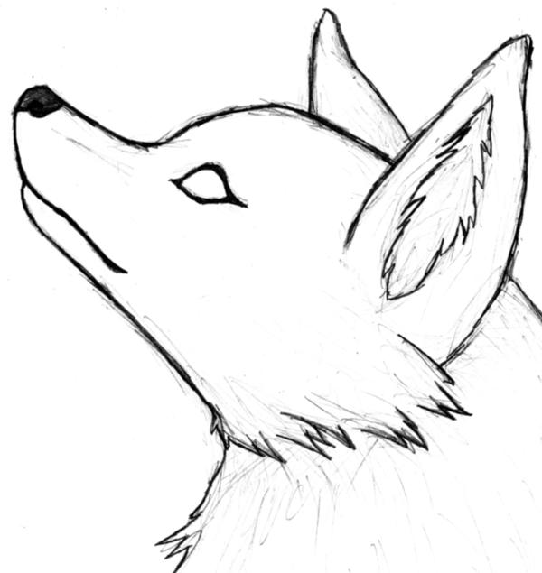 Plain Wolf Head By Lonelycard On DeviantArt