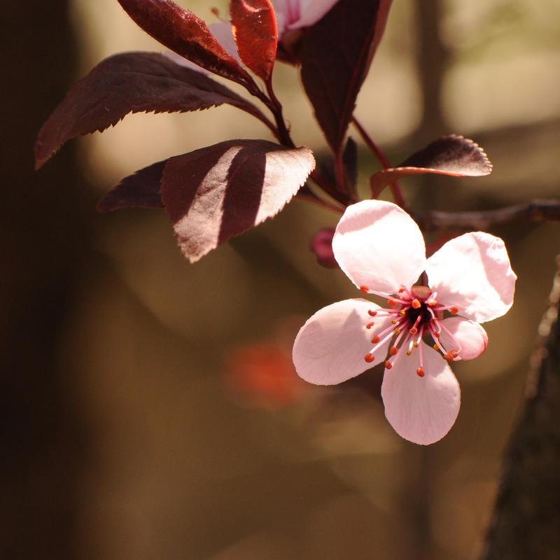 spring - L.l.t.k. - III by cosmicvoid
