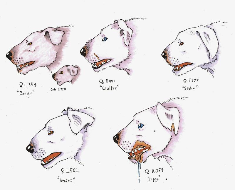 Portraits of Polar Bear-Dogs by Allison-beriyani on deviantART