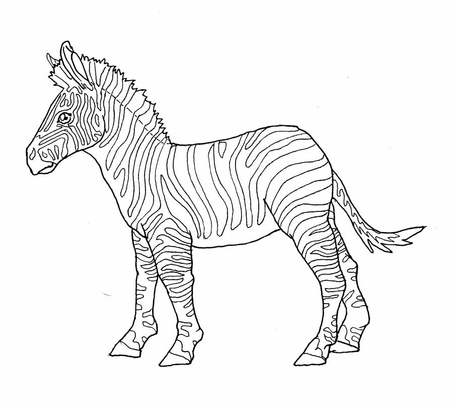 Line Drawing Zebra : Zebra lines by allison beriyani on deviantart