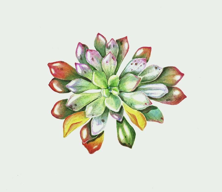 Echeveria lola by Allison-beriyani