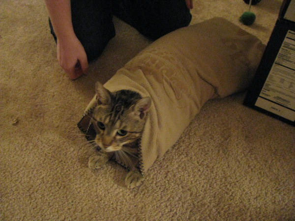 Purrito by Allison-beriyani