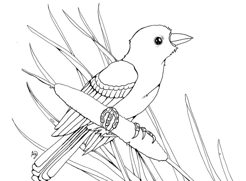 red winged blackbird coloring pages - photo#23