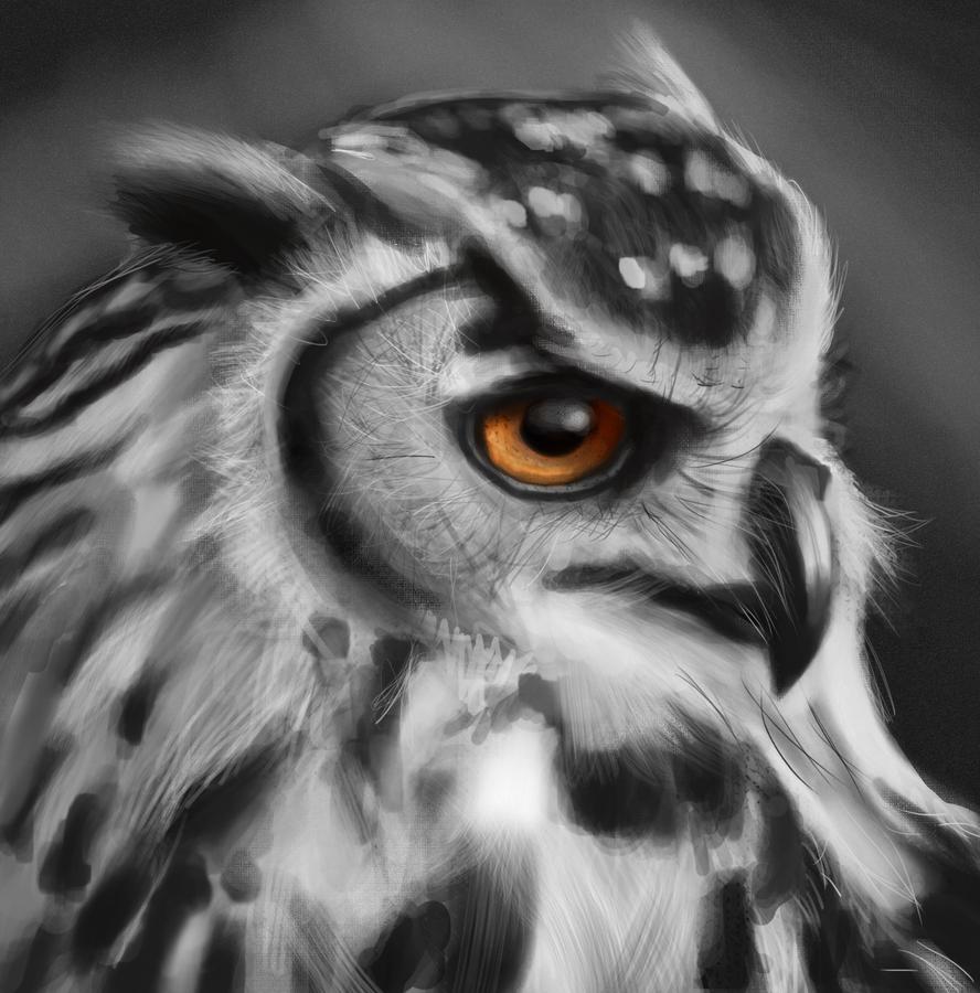 Owl sketch by KarachiIdiot