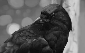 What kind of crows stick together?