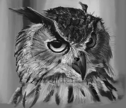 Well Owl Be Damned
