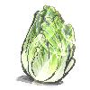 Cabbage by chocobikies