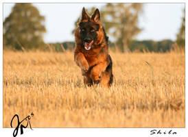 joyful dog by kyolein