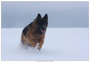 snowy by kyolein