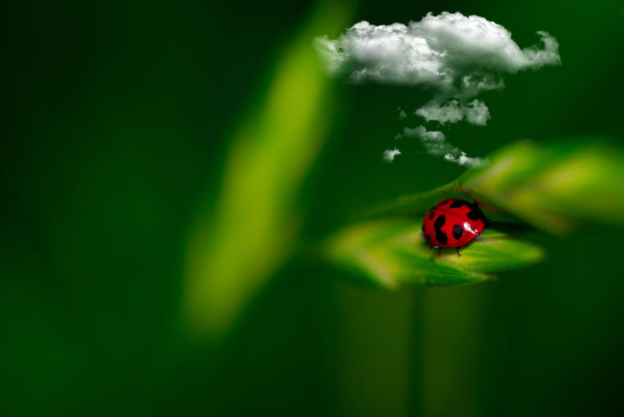 Cloudy with a chance of ladybugs by LandiCordier