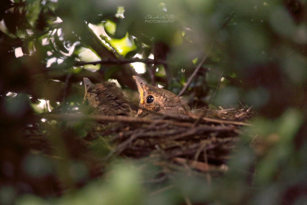 Birdy by shahils